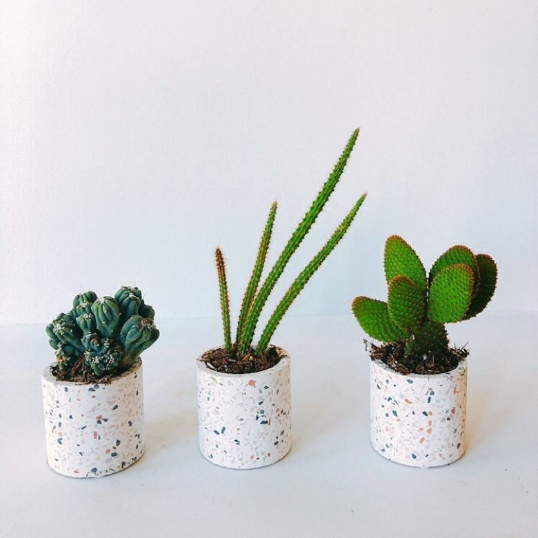 Medium sized cactus plant available for delivery to Watsonville, Ca