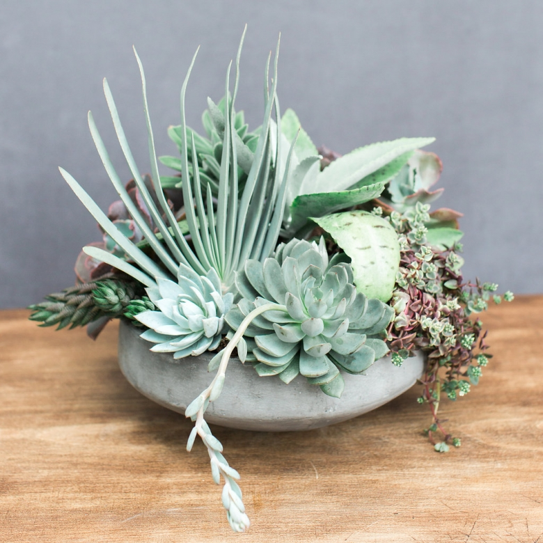 Mixed succulents and cactus available for delivery to Scotts Valley, California