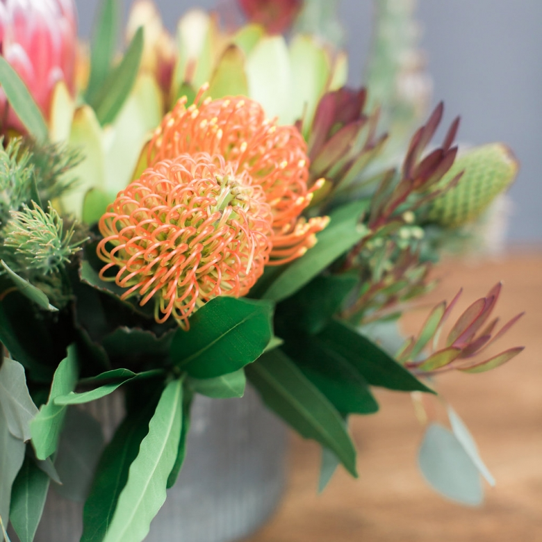locally grown orange protea
